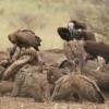 Enugu market vultures