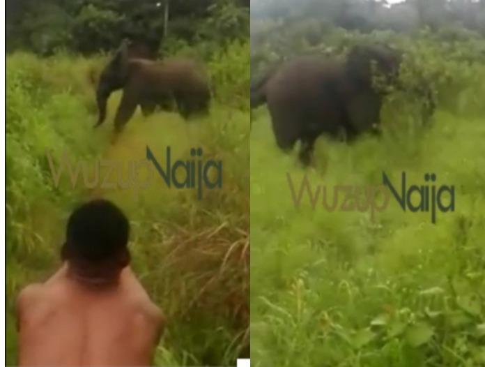 Elephants Ogun