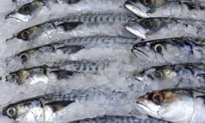 fish Emefiele