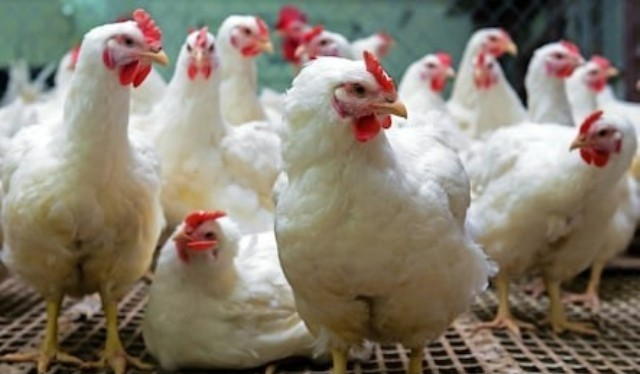 Angry mob stone father of seven to death for stealing chicken
