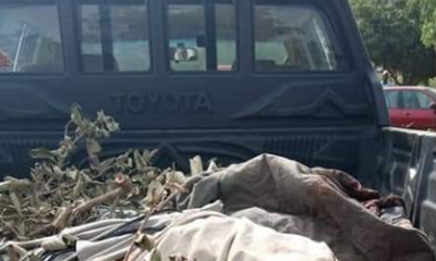 Katsina: 17 notorious bandits killed in a gun duel with police and vigilante(graphic photos)