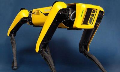 Covid-19: Singapore deploys 'Robot Dog' to encourage social distancing (photos)