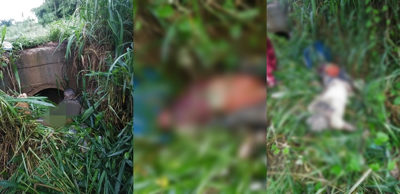Delta: Three decomposing bodies found in a bush