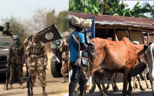 Borno: Boko Haram kills five herdsmen, rustles 480 cows