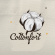 Online Sales & E- Marketing Coordinator at Cottonfort