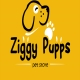Jobs and Careers at ziggy pupps Egypt
