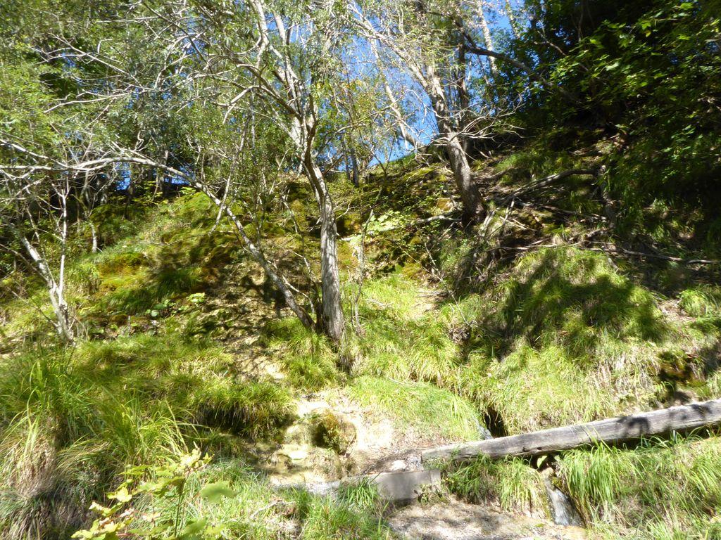 Die 10 schönsten Wanderungen im Bregenzerwald   Komoot