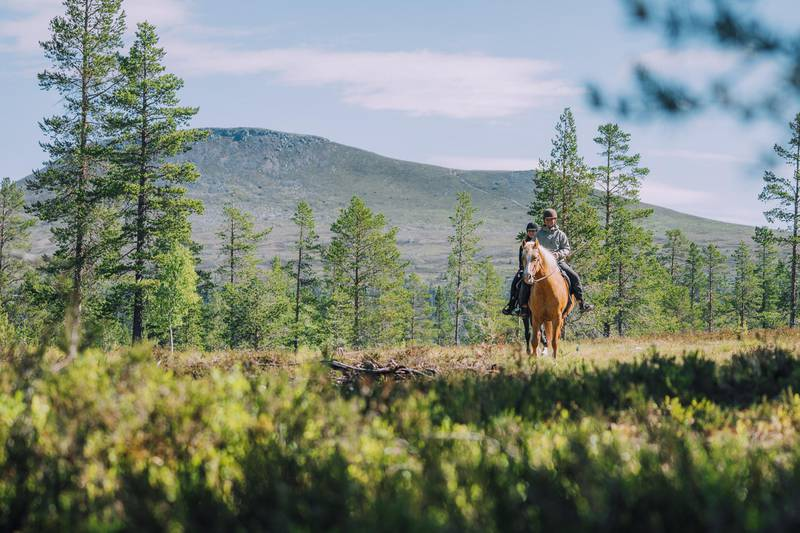 Horse back riding in Idre, Dalarna