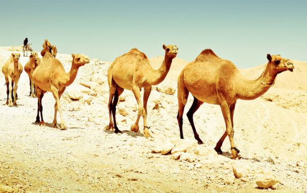 Apache Camel Integration Testing - Part 3: Exception Handling in