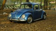 autumn-beetle-e1498409810158