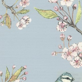 Blue tit on cherry blossom with a sky blue background blind print