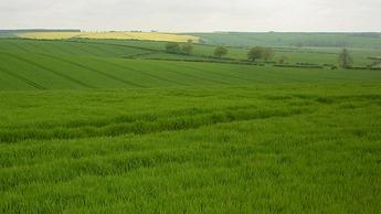 Crop Nutrition