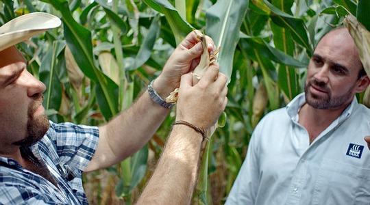 Mexican maize farmer meets Yara agronomist