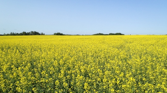 High yielding crops require Sulphur throughout the entire season