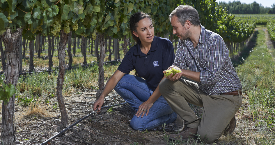 Yara agronomist and grape farmer in vineyard