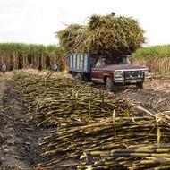 Incrementar la producción de azúcar