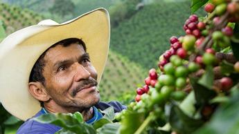 Imagen programas de nutrición para café