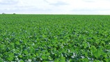 Reducing Oilseed Rape Carbon Footprint