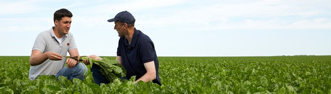 Farmers on sugar beat field