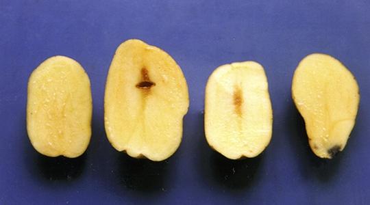 patatas, abono, abonos