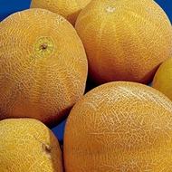Melon - World Production