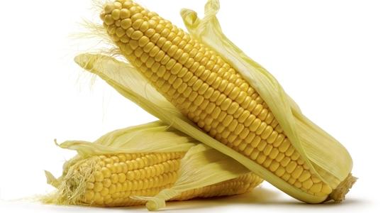 grain corn yield