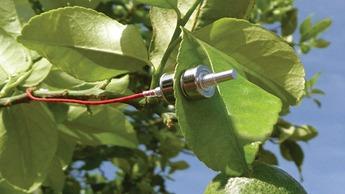 Yara Water Sensor on Citrus