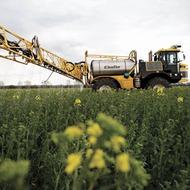 World Production of Oilseed Rape