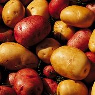 Potato Types