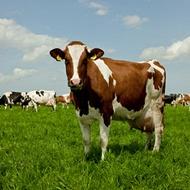 Efecto de micronutrientes sobre la producción en praderas
