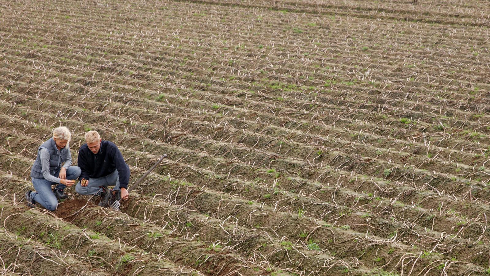 Potato Fertilizer Programme