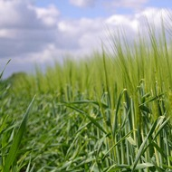 Barley Health