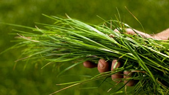 Gjødslingsråd for til gras, grovfôr, eng, beite og fôrvekster
