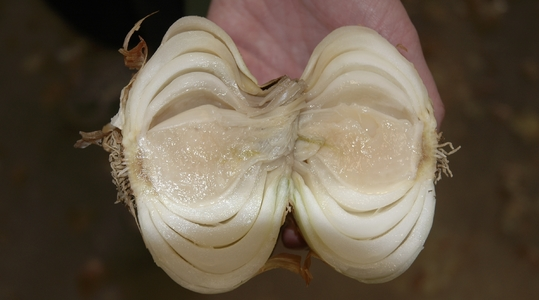 How to Improve Onion and Garlic Health