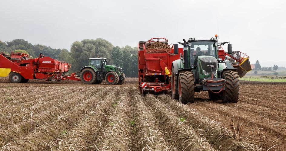 Foliar nutrition increases potato tuber bulking