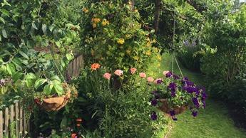 Gjødslingsråd hage