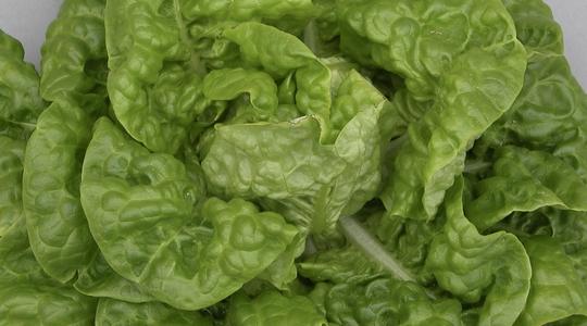 macronutrient deficiency in lettuce