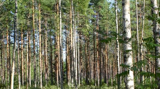 Ravinteiden merkitys metsälle
