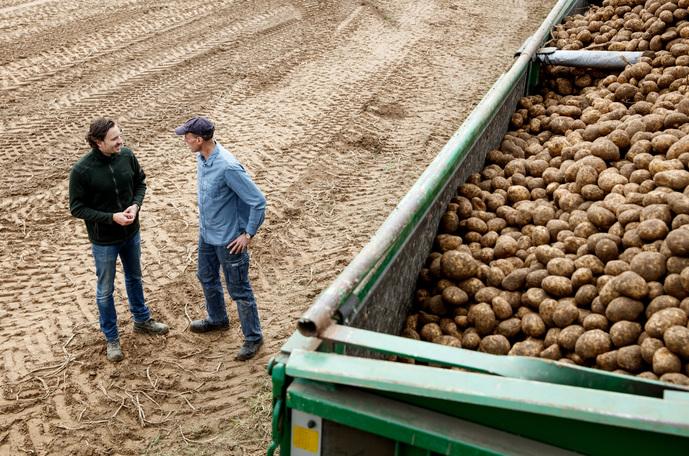 Calidad patata