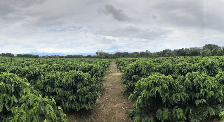 Yara Costa Rica
