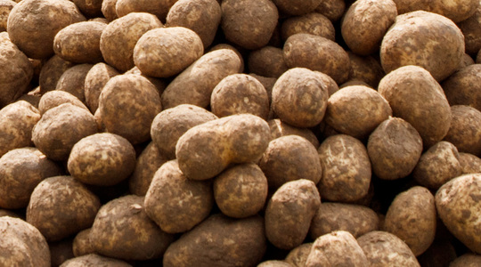 How to maintain potato health with nutrition