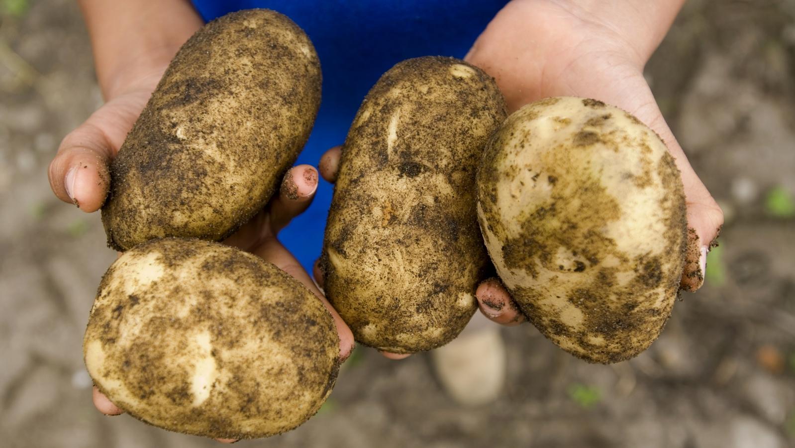 Resumen nutricional de la patata