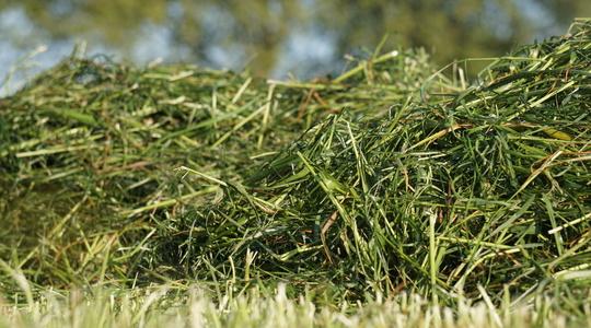 Forbedring af kvaliteten i græs