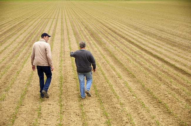two men walking in a field