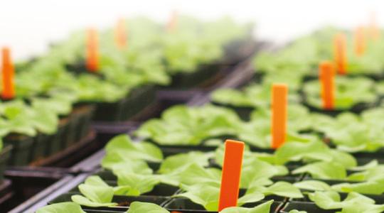 "Handboek ""Nutrient Solutions for Greenhouse Crops"""