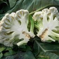 Preventing Stem (Heart) – Stem Cracking in Vegetable Brassica