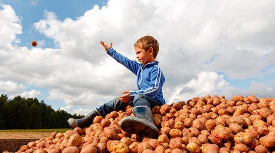 Qualità della patata