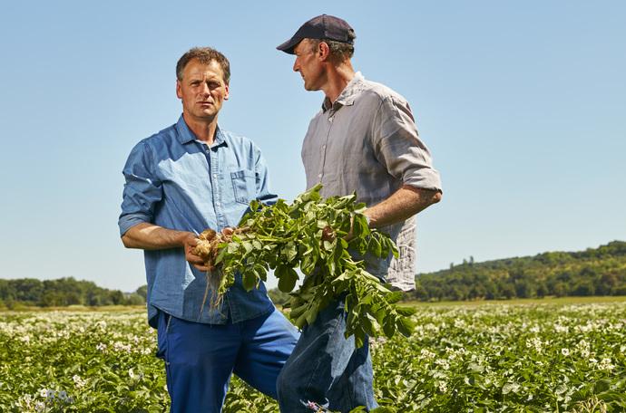Zwiększenie plonu bulw ziemniaków