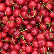 Cherries Crop Nutrition Programme