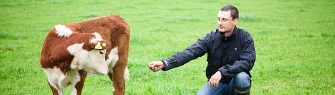 Cattle farmer Jaakko Veräväinen